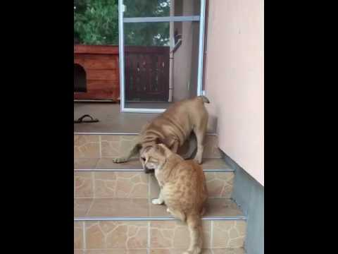 dog vs cat fight