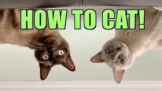 Cómo ser un gato | Lindo y gracioso