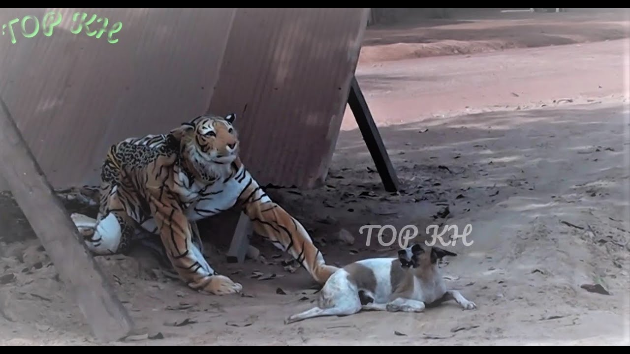 Fake tiger pretend to be a real tiger Prank Smart Dog - look at this so so funny video