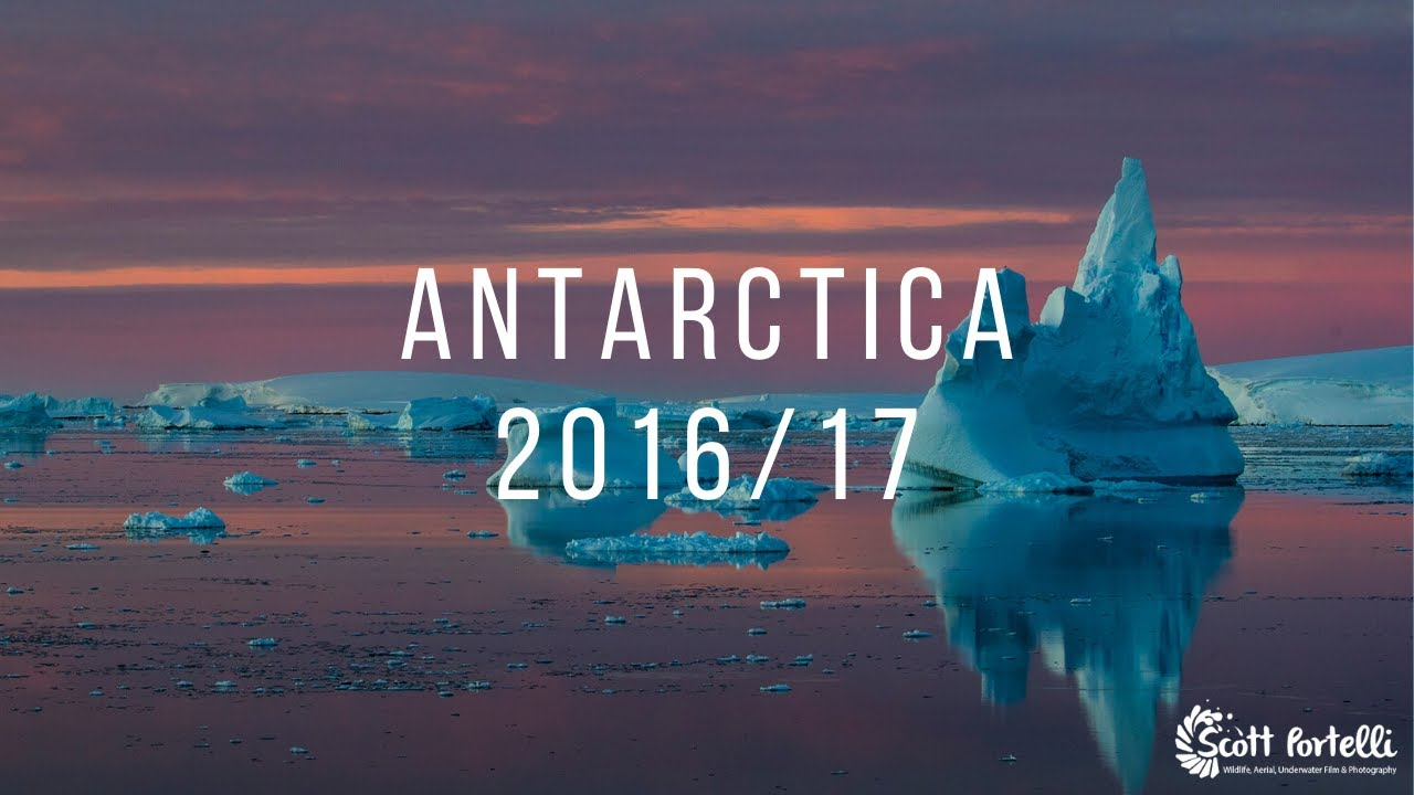 Antarctica leopard seals penguins adventure youtube antarctica leopard seals penguins adventure publicscrutiny Image collections