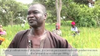 Samba Dembou, producteur de riz Nerica Volumineux