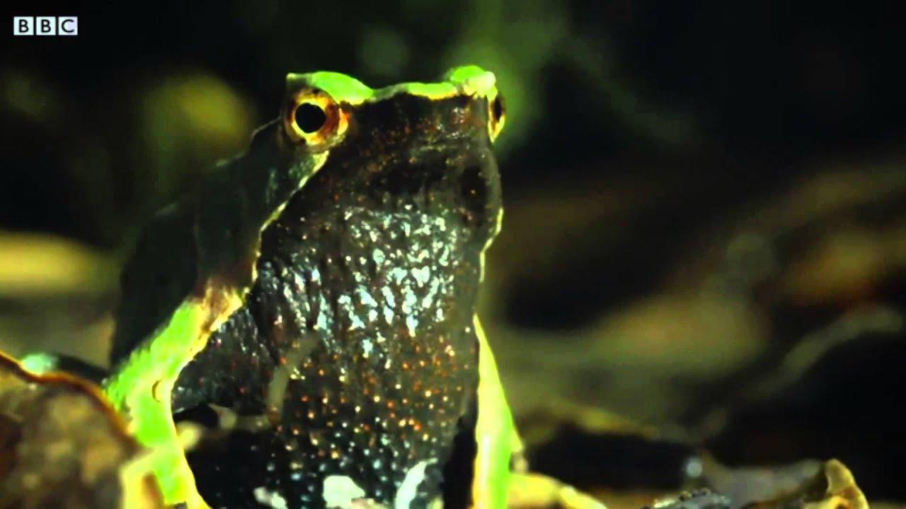 V Frog Kpm get rekt frog -...
