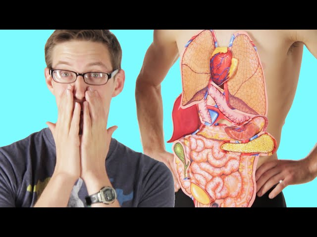 Adults try to label the human body ccuart Images