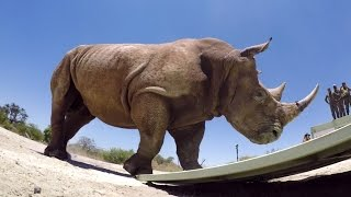 GoPro Cause: The Last of the Rhinos