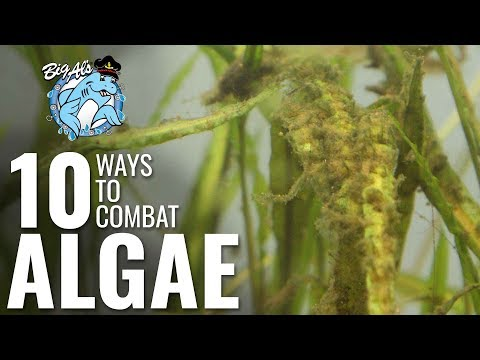 10 Ways To Combat Algae | BigAlsPets.com