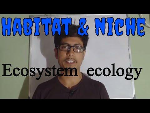 Ecosystem ecology | Habitat and niche
