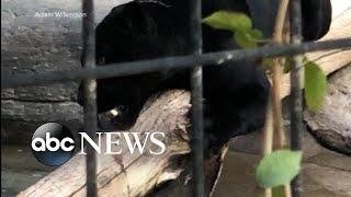 Woman attacked by jaguar at an Arizona zoo thumbnail