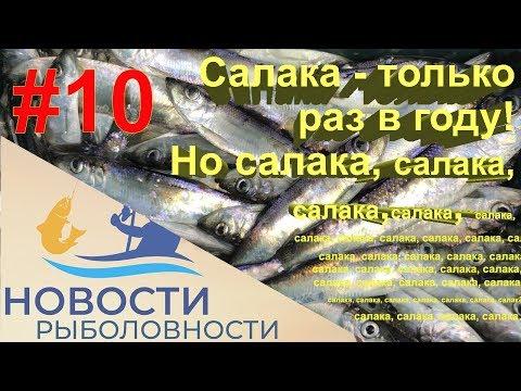 #10 Ловлю салаку в Балтийском море.