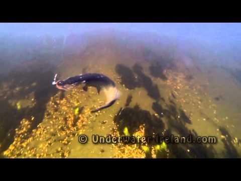 Щука подводное видео