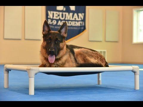 Cato (German Shepherd) Boot Camp Dog Training Video Demonstration
