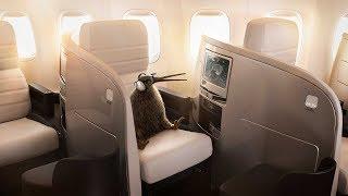 Conocé la Clase Business Premier de Air New Zealand