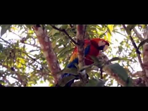 amazonas-colombia-el-viaje-de-tu-vida.....