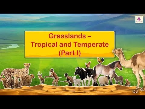 Grasslands - Tropical and Temperate | Social Studies For Grade 5 | Periwinkle