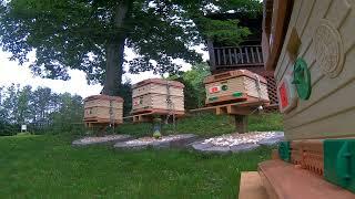 Papa John's Farm Hive Yard
