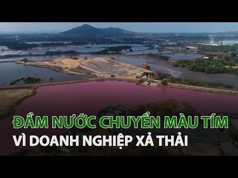 Doanh nghiệp xả thải vượt quy chuẩn, đầm nước đổi màu tím ngắt | VTC14