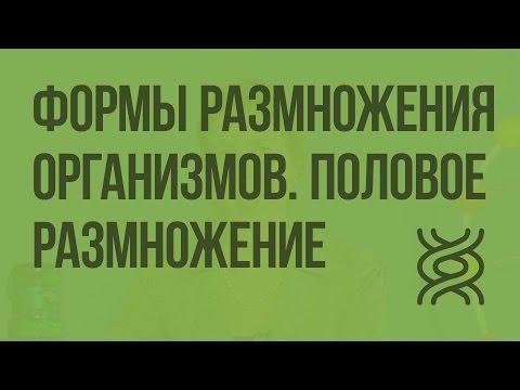 Формы размножения организмов. Половое размножение. Видеоурок по биологии 10 класс