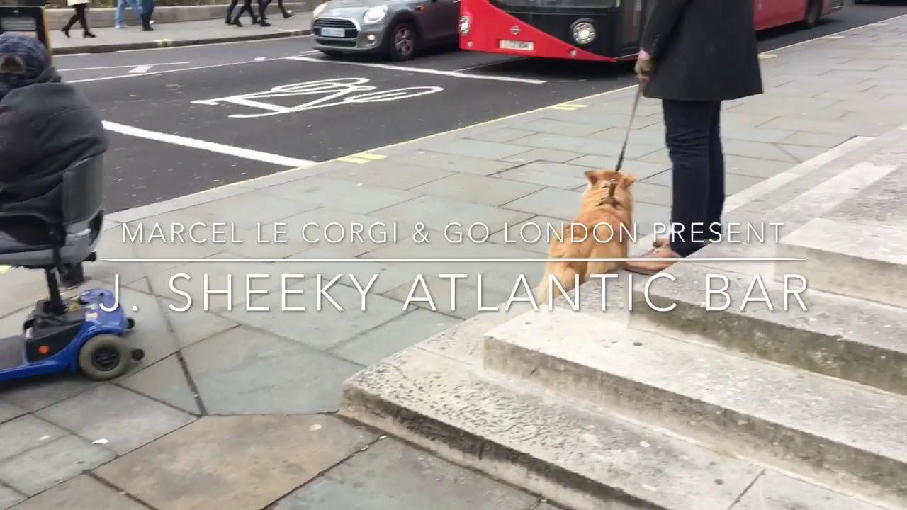London Dog Week: The best dog friendly restaurants in London