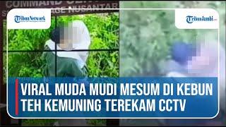 Viral Muda Mudi Mesum Di Kebun Teh Kemuning Terekam CCTV