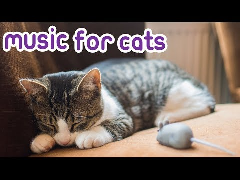 Cat Music! Natural Anxiety Remedy for Cats!