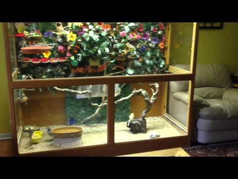 Indoor Aviary