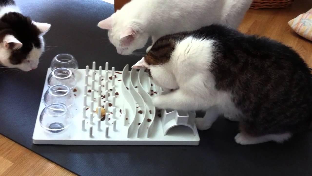 katzenbesch ftigung drei katzen mit ihrem katzenspielzeug youtube. Black Bedroom Furniture Sets. Home Design Ideas