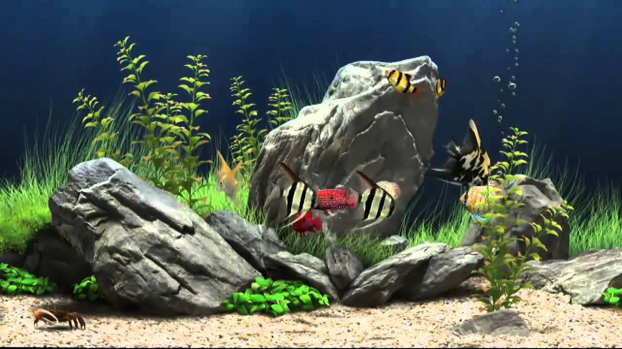 Dream aquarium virtual fishtank 1 hd youtube - Dream aquarium virtual fishtank 1 ...