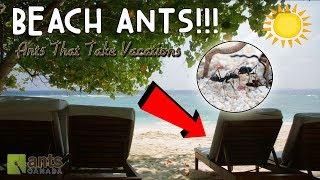 BEACH ANTS?! 🏝✈