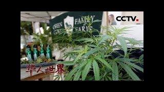 《华人世界》美国纽约州娱乐大麻合法化立法今年不表决 华人社区表示欢迎 20190628 | CCTV中文国际