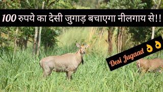 नीलगाय भगाने का देसी जुगाड़  || Protection of crops from wild Animals || Hello Kisaan [Eng Subs]