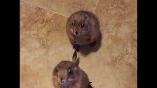 Adorable Prairie Dogs Begging For Treats || ViralHog