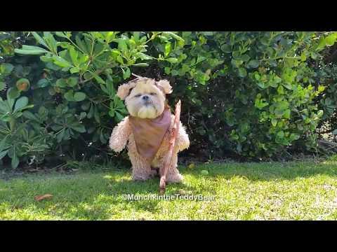 Munchkin The Teddy Bear Ewok