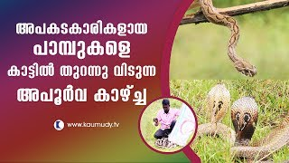 Wow! Venomous Snakes released in the forest | Snake Master | Vava Suresh | Latest Episode
