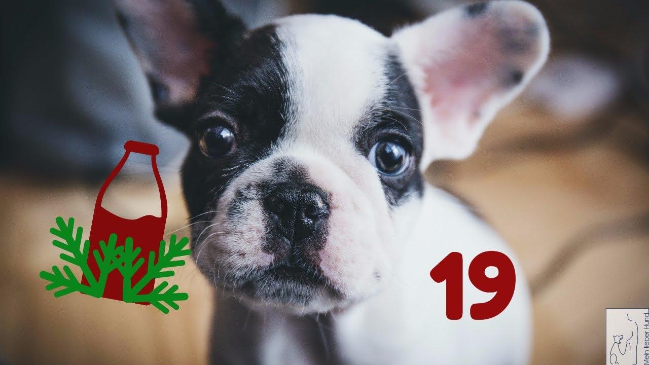 Weihnachtskalender Hund.Adventskalender Hund 19 Flaschendrehen