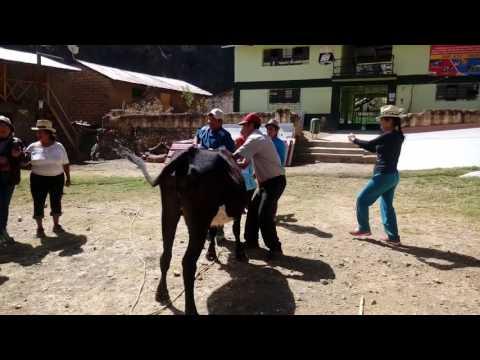 HERRANZA EN LA FIESTA DE SAN JUAN BAUTISTA DE QUISQUE 2017