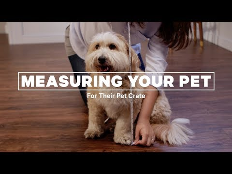 How To Measure Your Dog For Its Crate