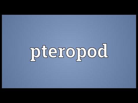 Header of pteropod