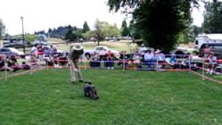 Tricks Contest At Schnauzer Walk 2011