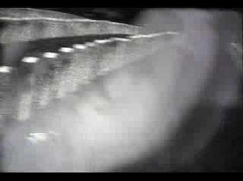 Mother Love Bone- Stardog Champion