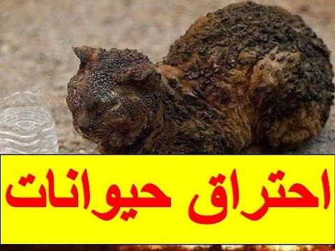 لا يصدق| صور ترصد احتراق حيوانات وهي حية وخسائر هائلة بسبب الحرائق بتيزي وزو