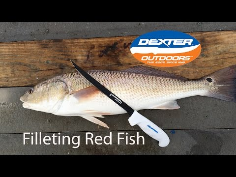 Filleting Redfish With A Dexter Knife