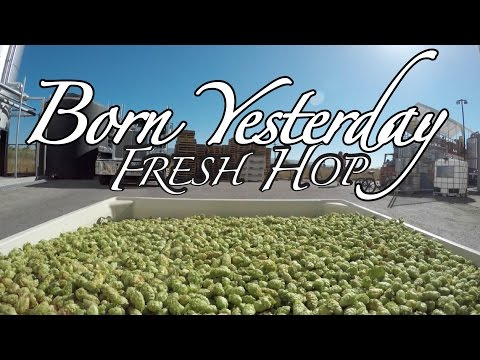 Borning Fresh Hops in Born Yesterday