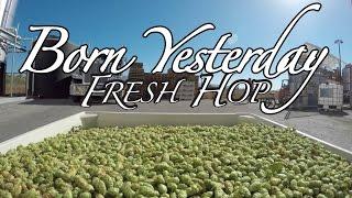 Borning Fresh Hops in Born Yesterday