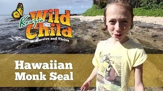 Kenzie Wild Child Hawaiian Monk Seal