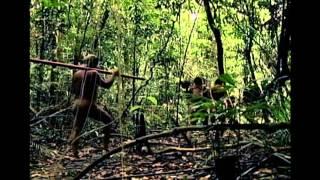 Institucional | Viagem pela Amazônia | Amazon Sat