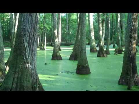 Cypress Swamp Natchez Trace Jackson Mississippi