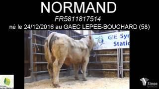 NORMAND 7514 par Simon Genetic