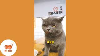 BE CAREFULL - CUTE CATS AND KITTENS DOING FUNNY THINGS 2018 _ FUNNY CATS AND DOGS VIDEOS COMPILATION