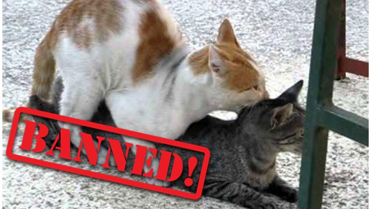 Порно видео cats бесплатно