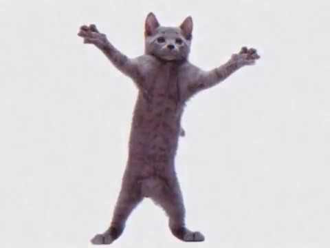 Cat dancing to hamster song void meme