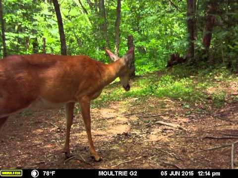 Moultrie M-550 Gen2 Camera Download Drivers